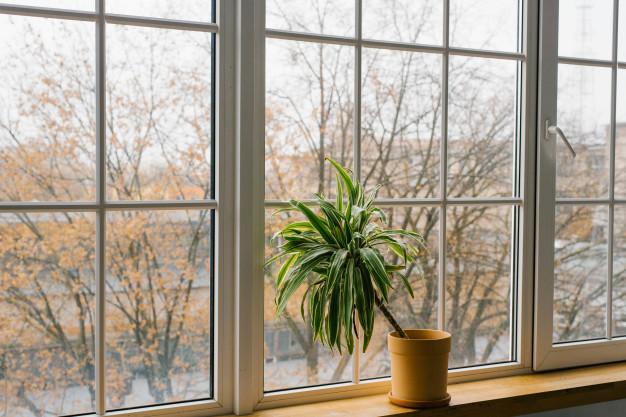 the best light for Care for Dracaena Houseplants