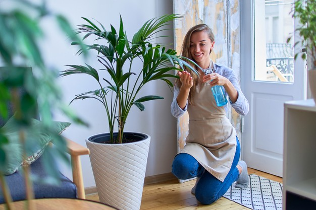 How to water houseplants?