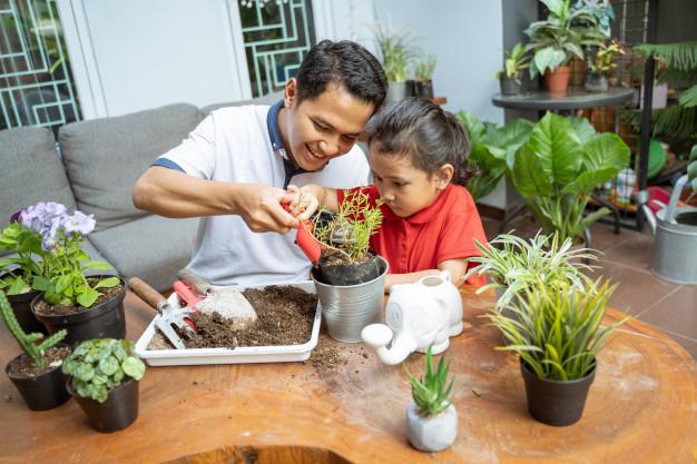 repotting houseplant
