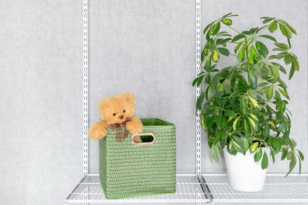 Caring for Schefflera Houseplants