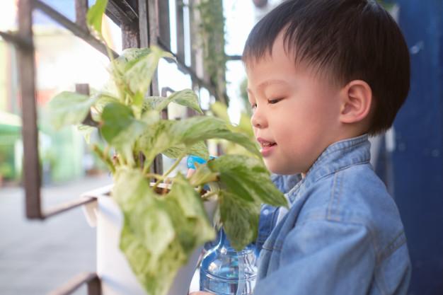 Care for Pothos Houseplants