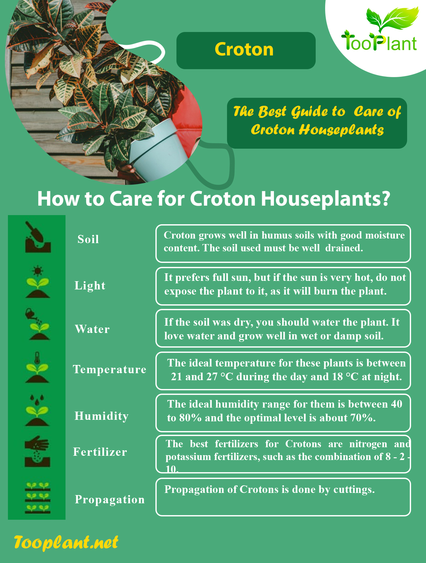 Infographic of Care for Croton Houseplants