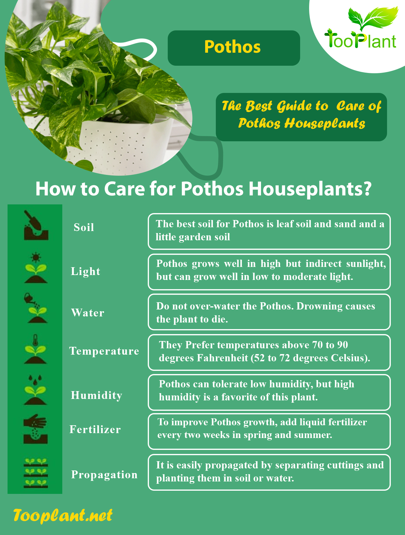 Infographic of Care for Pothos Houseplants