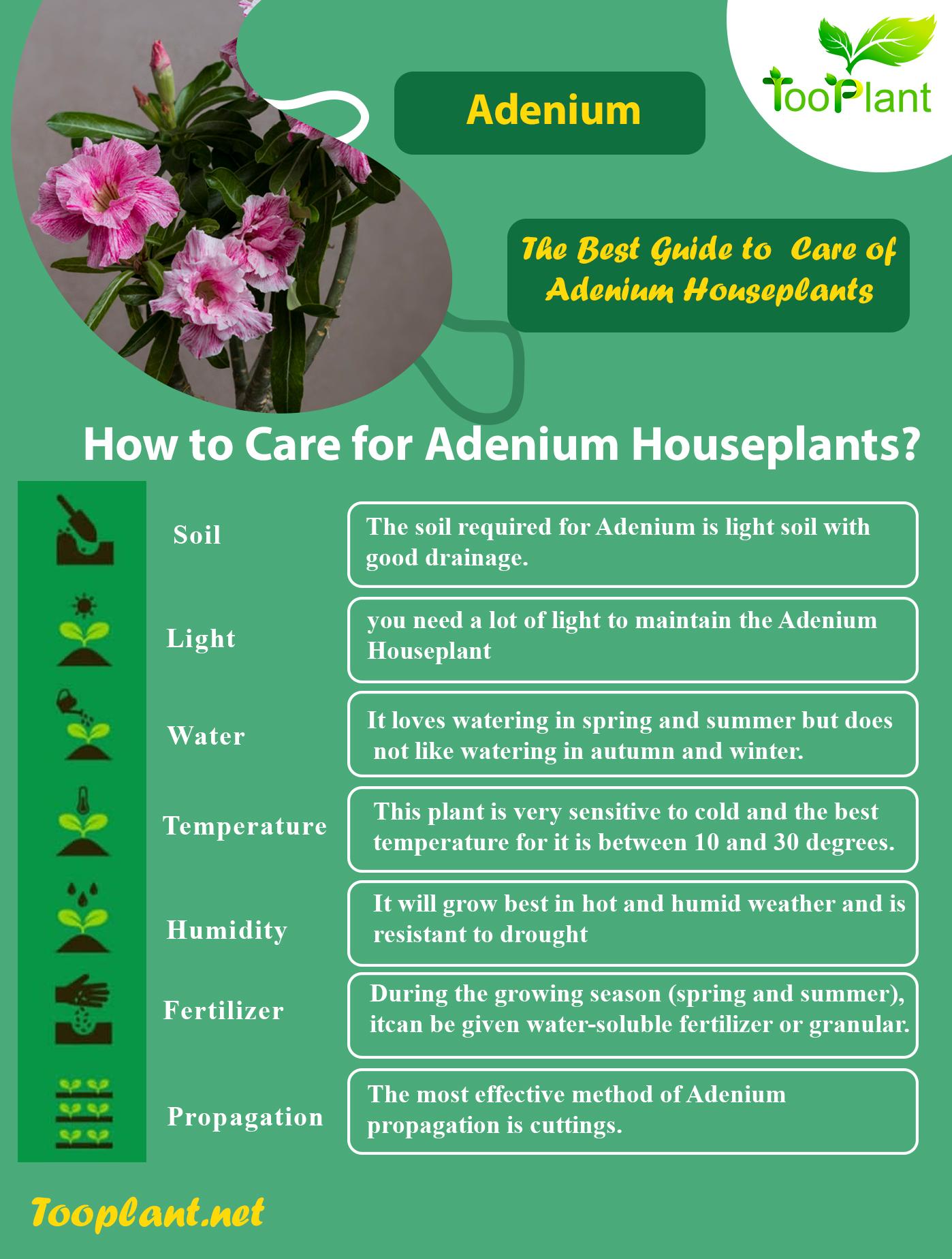Infographic of Care for Adenium Houseplants