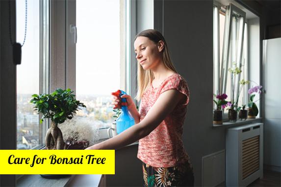 How do you water an indoors Bonsai?