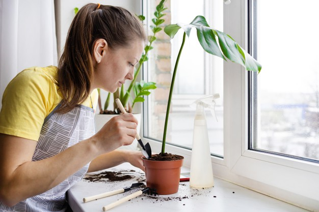 how to fertilize Monstera ?