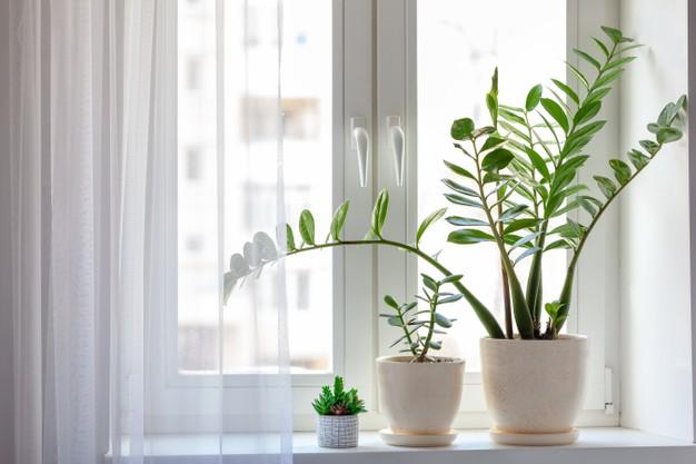 Where should I place my ZZ plant?