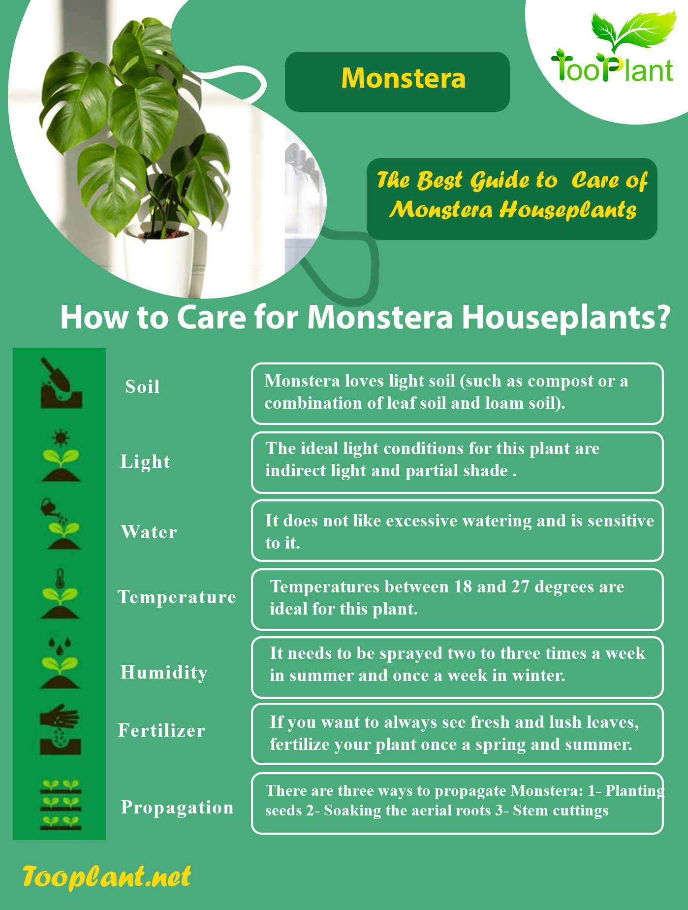 Infographic of Care for Monstera Houseplants
