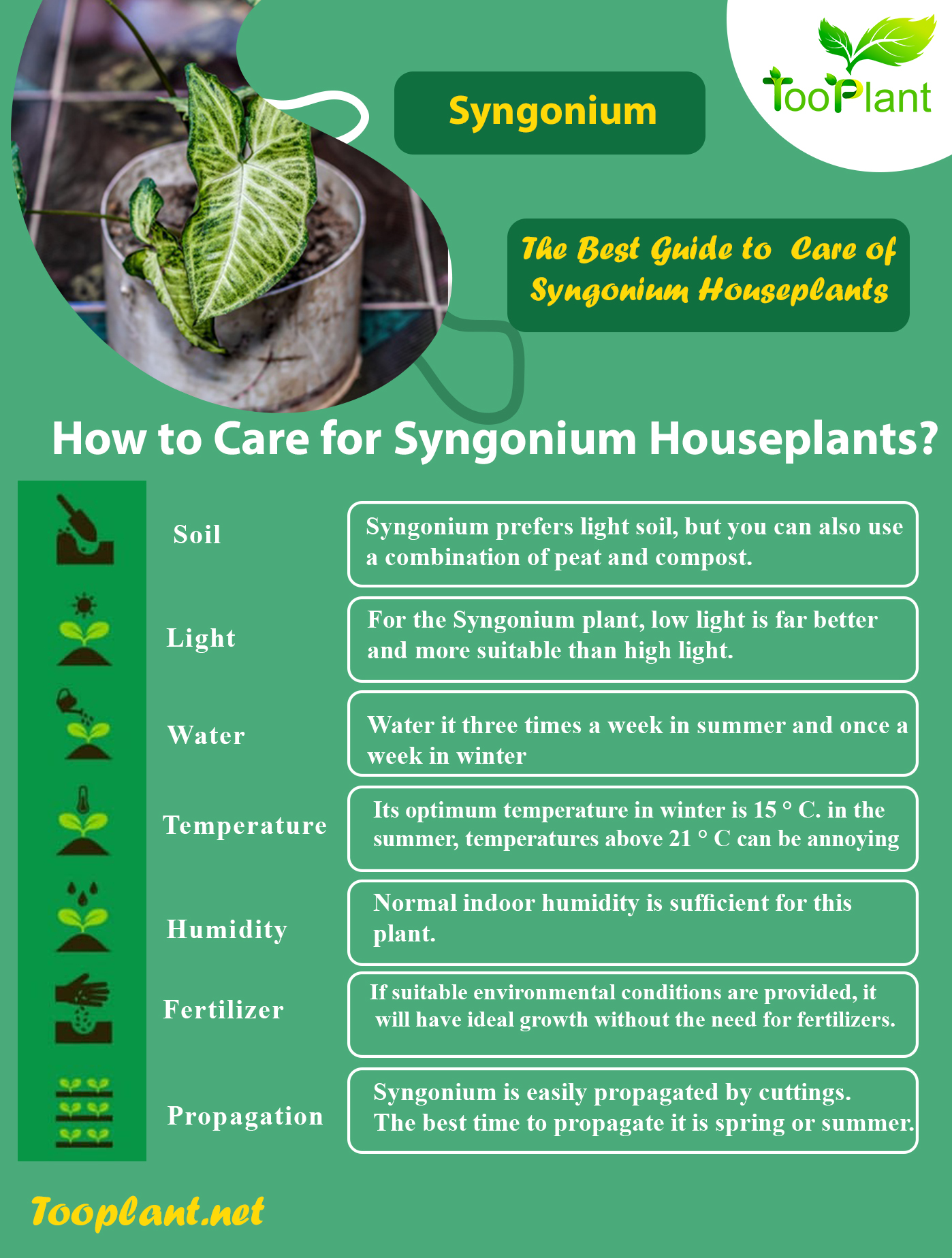 Infographic of Care for Syngonium Houseplants