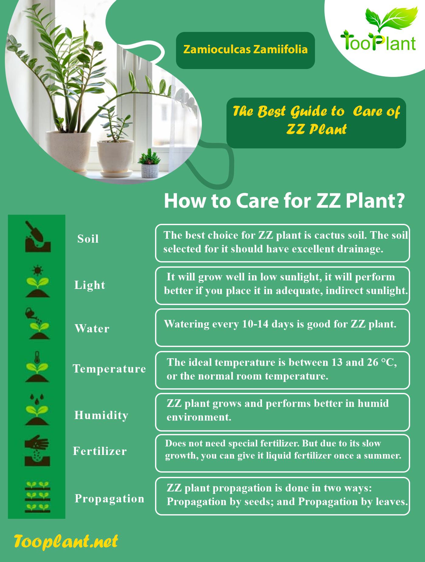 Infographic of Care for ZZ Plants