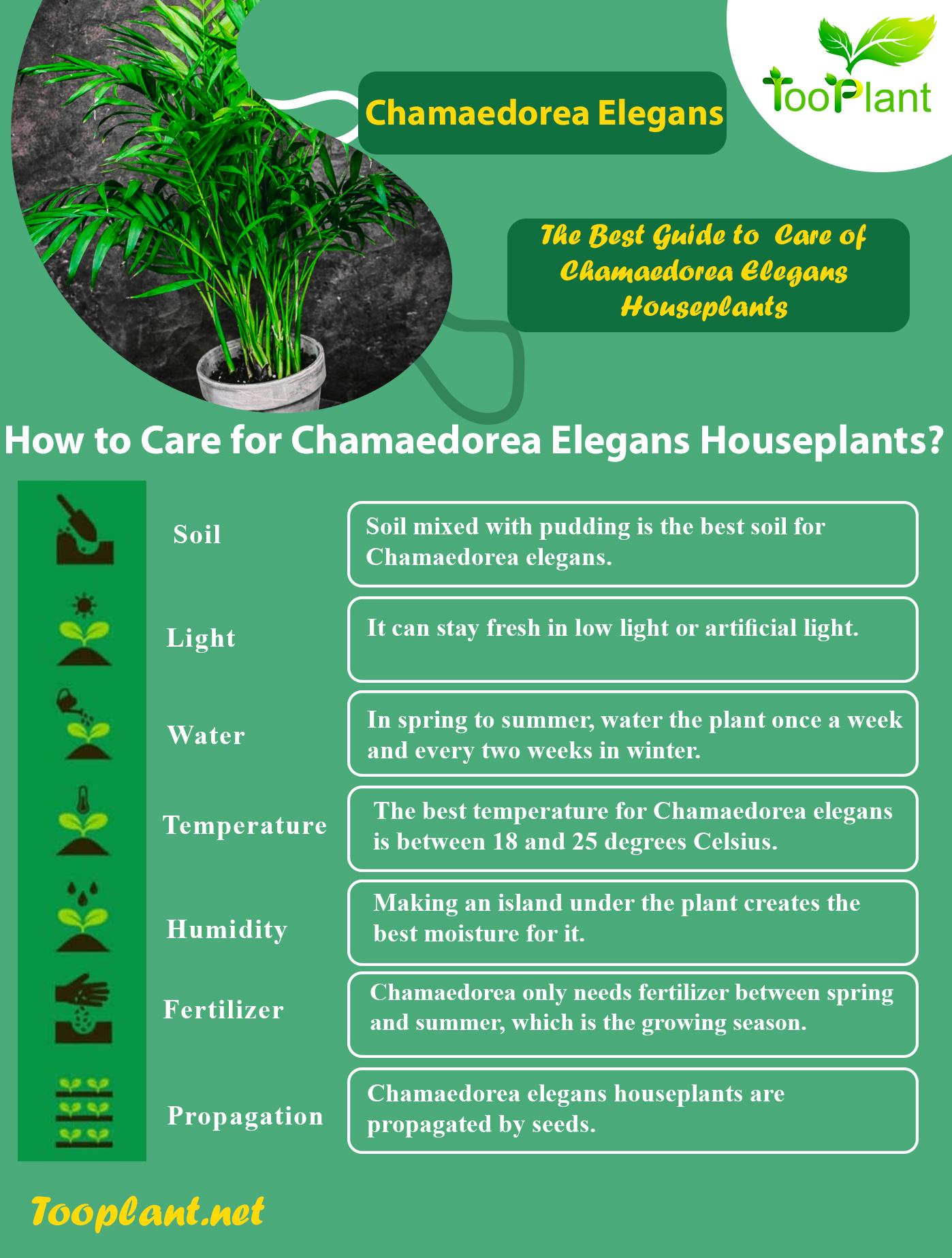 Infographic of Care for Chamaedorea Elegans Houseplants