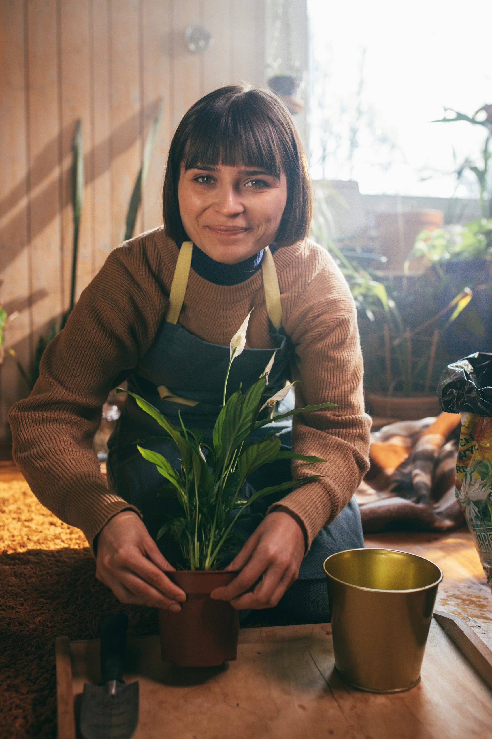How to Repot Spathiphyllum houseplants?