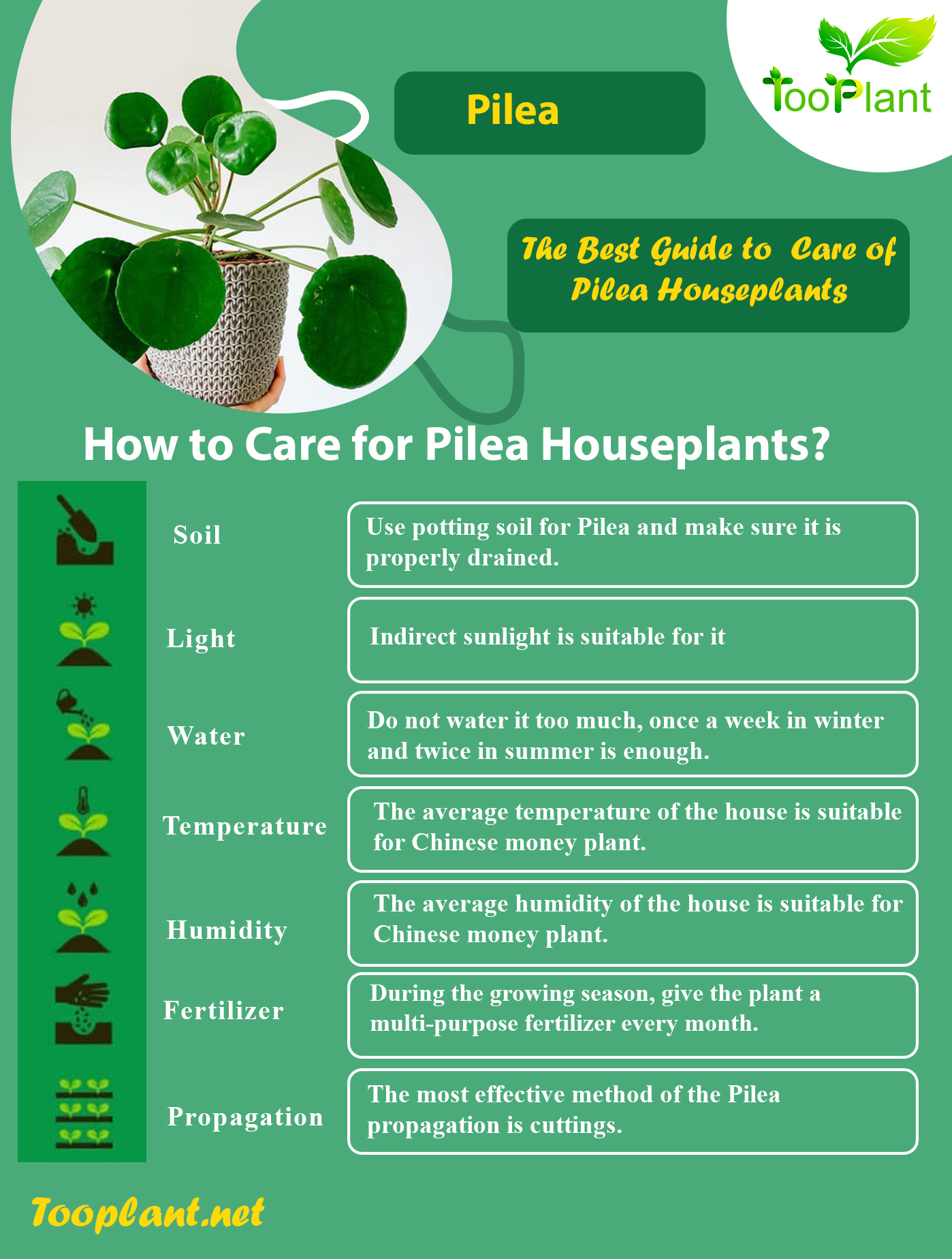 Infographic of Care for Pilea Houseplants