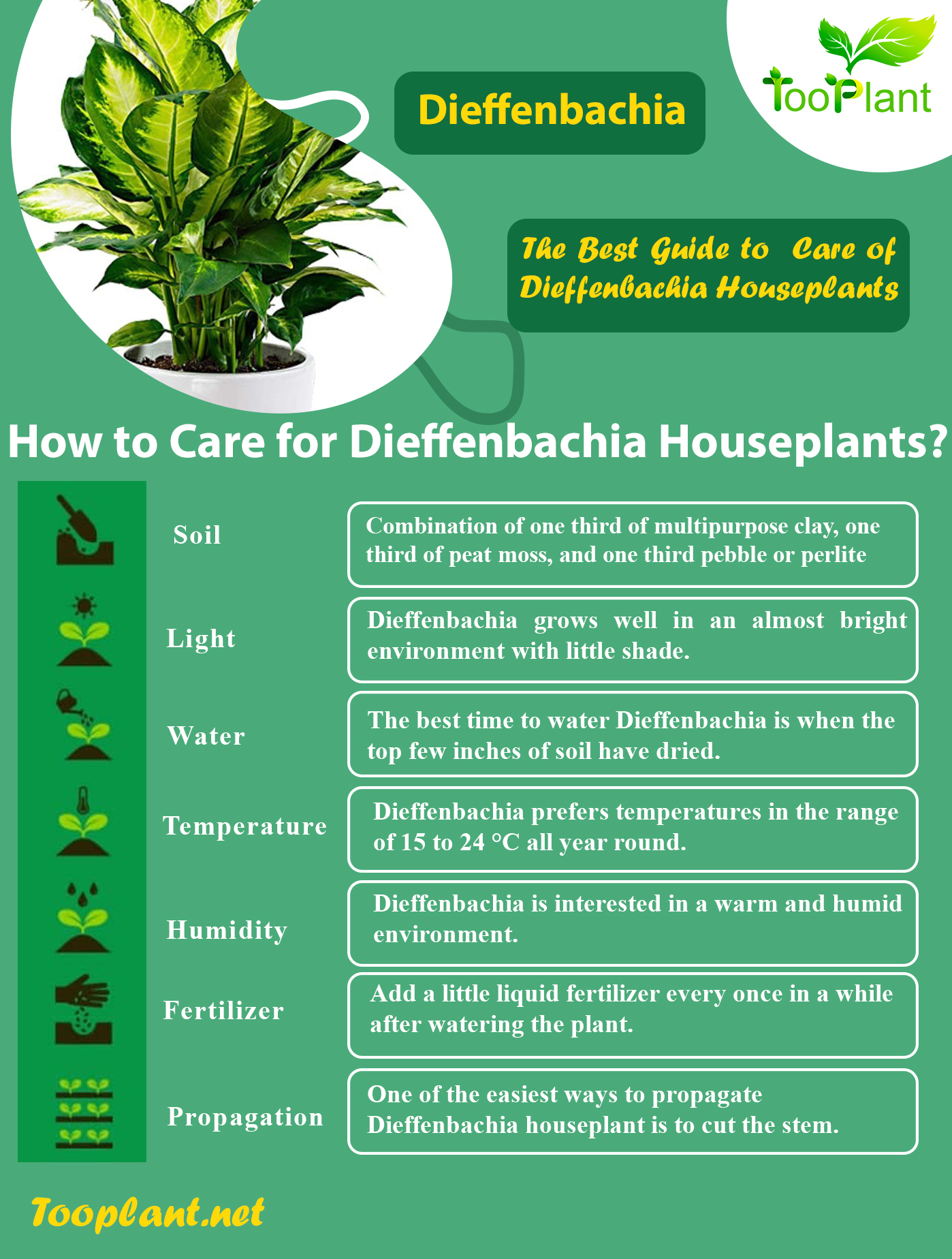Infographic of Care for Dieffenbachia Houseplants